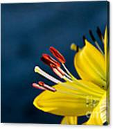 Yellow Lily Stamens Canvas Print