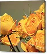 Yellow Mini Rose's Closeup Canvas Print
