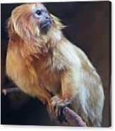 Yellow Monkey Canvas Print