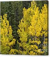 Yellow On Green Canvas Print