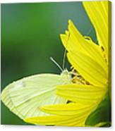 Yellow On Yellow Canvas Print