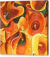 Yellow-orange Calla Lilies Canvas Print