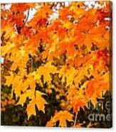 Yellow Orange Fall Tree Canvas Print