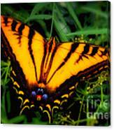 Yellow Orange Tiger Swallowtail Butterfly Canvas Print