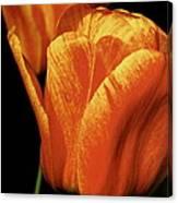 Yellow Orange Tulip Canvas Print