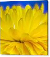 Yellow Petal Explosion Canvas Print