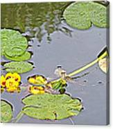 Yellow Pond Lilies On Lake Yellowhead Along Yellowhead Highway-b Canvas Print