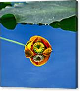 Yellow Pond Lily Canvas Print
