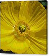 Yellow Poppy Flower Canvas Print
