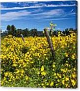 Yellow Profusion Canvas Print