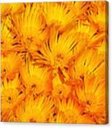Yellow Radiance  Canvas Print