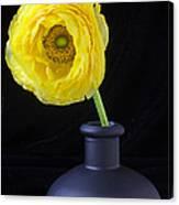 Yellow Ranunculus In Black Vase Canvas Print