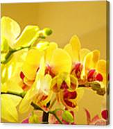 Yellow Red Orchid Flowers Art Prints Orchids Canvas Print