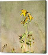 Yellow-red Wildflower With Texture Canvas Print