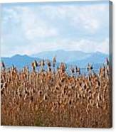Yellow Reeds And Blue Mountains Canvas Print