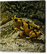 Yellow Rock Jumper Canvas Print
