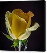 Yellow Rose 1 Canvas Print