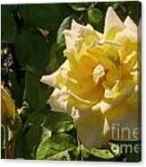 Yellow Rose And Bud Canvas Print