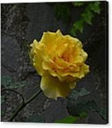 Yellow Rose Canvas Print