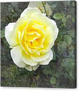Yellow Rose Of Summer Canvas Print