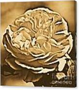 Yellow Rose Of Texas Floral Decor Square Format Rustic Digital Art Canvas Print