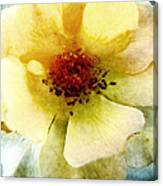 Yellow Rose Painted Canvas Print