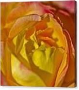 Yellow Rose Up Close Canvas Print