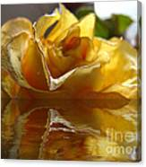Yellow Rose Wet And Dry Canvas Print