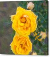 Yellow Roses On A Bush Canvas Print