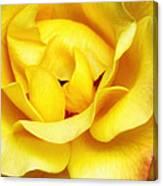 Yellow Sapphire Rose Palm Springs Canvas Print