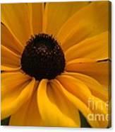 Yellow Silk Canvas Print