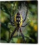 Yellow Spider Canvas Print
