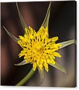 Yellow Star Flower Canvas Print