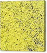 Yellow Street Canvas Print