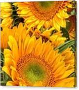 Yellow Sun Flower Burst Canvas Print
