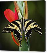 Yellow Swallowtail Butterfly  Canvas Print