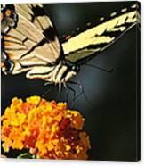 Yellow Swallowtail Canvas Print