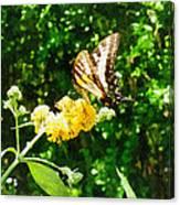 Yellow Swallowtail On Yellow Lantana Canvas Print