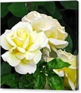 Yellow Tea Roses Canvas Print