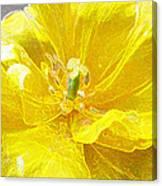 Yellow Tenderness Canvas Print