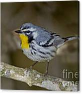 Yellow-throated Warbler Canvas Print