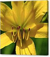 Yellow Too Lily Flower Art Canvas Print