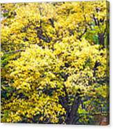 Yellow Tree Canvas Print