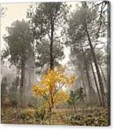 Yellow Tree In The Foggy Forest Canvas Print