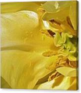 Yellow Tulip Abstract Canvas Print