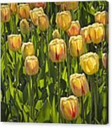 Yellow Tulip Flowers On Windmill Island In Holland Michigan Canvas Print