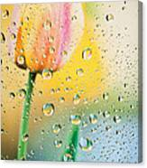 Yellow Tulip Reflecting In Water Drops Canvas Print