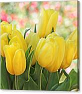 Yellow Tulips In The Spring Garden Canvas Print