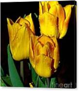 Yellow Tulips On Black Canvas Print