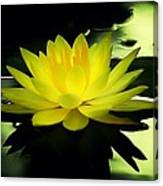 Yellow Waterlily Nc Canvas Print